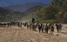 Niger: des mesures prises pour stopper l'épidémie de fièvre de la vallée du Rift