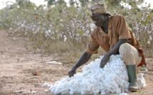 Côte d'Ivoire: les TIC pour améliorer la productivité agricole
