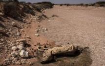 Somalie : la faim tue 110 personnes