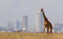 Kenya: les problèmes fonciers au cœur de la campagne présidentielle