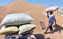Commercialisation de l'arachide : Le cadre national de concertation des Ruraux déçu du prix fixé par l'Etat