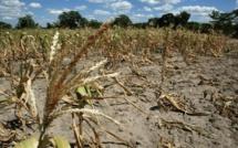 Zimbabwe: la durée du bail des fermiers blancs passe de 5 ans à 99 ans