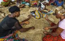 Côte d'Ivoire : pourquoi le café est-il bloqué ?