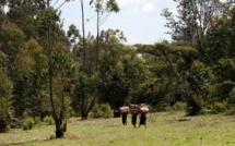 Kenya, la forêt de Mau en danger