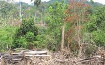 Disparition d'exploitants forestiers à Ziguinchor: Aucune trace trouvée malgré les investigations de la Gendarmerie