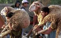 Au Caire, sacrifier un mouton dans la rue est passible d'une amende