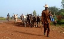 Louga: Cinq personnes d'une famille arrêtées pour avoir « sauvagement tabassé » un berger