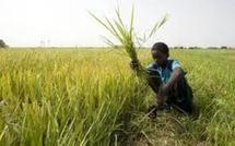 Agriculture: Les opérateurs privés stockeurs lèvent leur mot d'ordre de boycott