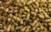 Agriculture: L'Etat supprime la subvention de l'arachide