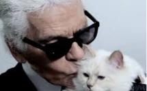 Décès Karl Lagerfeld : sa chatte «Choupette» désignée comme héritière