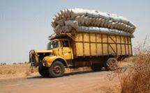 Distribution de semences d'arachides à Diourbel: Certaines communautés rurales attendent leurs semences