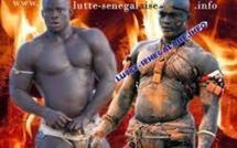 Lutte-Modou Lô-Eumeu Sène : Luc Nicolaï traite Gaston Mbengue de torpilleur des combats de Modou Lô