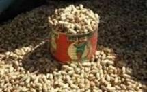 Campagne arachidière 2011: le kilogramme d'arachide passe de 165 à 175 franc CFA