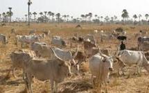 Contre l'occupation de leurs terres par des investisseurs italiens : un éleveur blesse quatre personnes par arme blanche