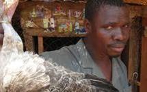 Préparatifs de la Tabaski : La souffrance endurante des vendeurs de poulets