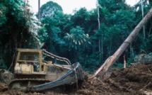 Gabon: François Wu s'exprime sur l'affaire du bois précieux kevazingo