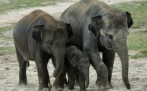 Le commerce de plus de mille espèces protégées interdit à Genève
