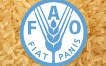 Malawi et la Zambie, cibles du projet d'agriculture intelligente de la FAO