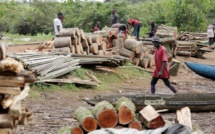 Coupe de bois à Kolda : trois organisations dont le Forum Civil appellent l'Etat du Sénégal à plus de rigueur