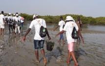 Environnement : plus de 3 000 palétuviers plantés dans la mangrove de Palmarin