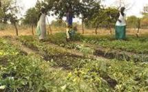 Présidentielle 2012: IPAR, CNCR et CONGAD interpellent les candidats sur l'agriculture et le foncier