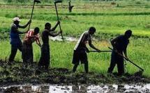 Les organisations paysannes déterminées à faire appliquer au futur président sénégalais une sérieuse politique agricole et foncière