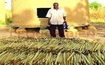 Situation alimentaire et nutritionnelle en Afrique : Le Sénégal parmi les plus touchés par les baisses de la production céréalière au Sahel