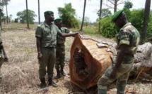 Kédougou: neuf burkinabé arrêtés pour coupe illégale de bois