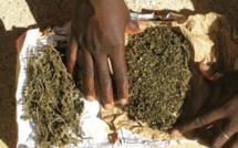 Trafic de drogue à Médina Gounass: quatre grands dealers dont une veille dame, arrêtés