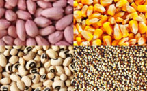 Agriculture-Kaolack: le gouvernement à la recherche de semences de qualité