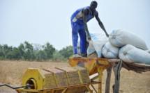 Agriculture: l'arachide, pouvoir économique du Sine-Saloum en décadence