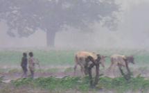 Destruction  agricole : le gouvernement promet d'indemniser