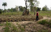 Prévisions de récoltes de la campagne agricole au Sahel et en Afrique de l'Ouest : Matam dans la zone à risque