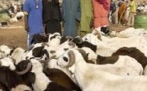 Tabaski 2012: Taxes et transport coûteux du bétail, sources de la cherté du mouton