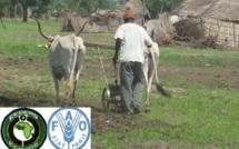 La FAO signe un « mariage sans divorce » avec la CEDEAO pour combattre la faim en Afrique de l'Ouest