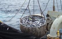 Retour des bateaux étrangers : Les acteurs de la pêche et Greenpeace ne font pas confiance à Pape DIOUF