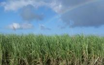 Résolution définitive de la rébellion en Casamance : ATEPA parle de l'installation d'une sucrerie