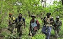 Ziguinchor: trois (3) jeunes enlevés dans la forêt de Bilasse