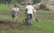 Escroquerie à Koungheul : des responsables de l'APR soutirent de l'argent aux paysans