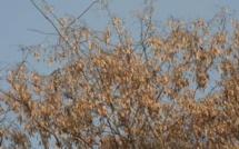 Madagascar : la CITES va réglementer le bois de rose pour freiner le trafic