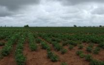 Saint-Louis : Senhuile/Senethanol diversifie sa production pour gagner le pari