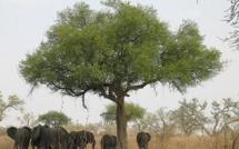Cameroun: la société américaine Herakles Farms dans le collimateur des autorités