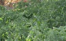 Vidéo-Agriculture urbaine et périurbaine: les acteurs se concertent pour relever les défis