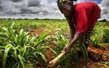 Au Mali, on dénonce l'accaparement des terres et les expulsions