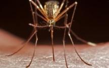 Paludisme: les spécialistes saluent les bons résultats de l'Afrique du Sud pour lutter contre la maladie