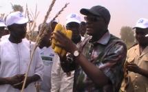 DOSSIER Emploi des Jeunes et Agriculture: Le ministère de la Jeunesse et le FNPJ s'appuient sur Agrophytex pour de meilleurs rendements