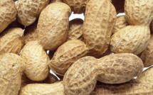 Grossesse : Manger des cacahuètes ne serait pas dangereux, au contraire