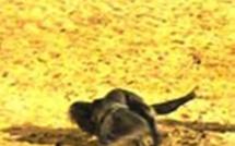 En images : Xaragne Lô administre une leçon de lutte à Eumeu Sène