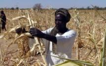 Le Tchad s'affiche au Salon de l'agriculture