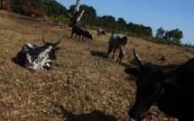 Madagascar: conflits entre des villages dans le sud, au moins 22 morts